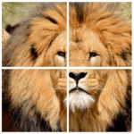 Wild Animals Puzzle 3.9 APK